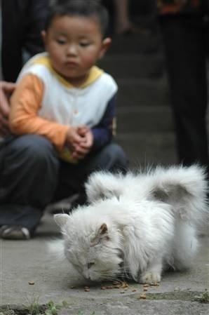 anjing bersayap