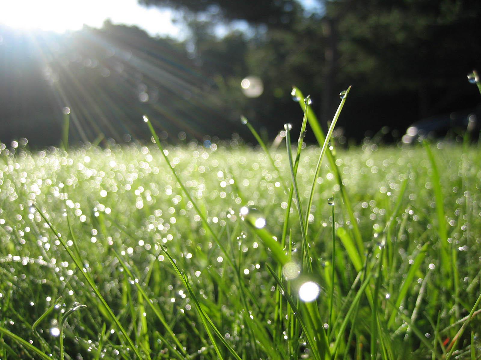 In secercah cahaya untuk embun di pagi hari : mari kita berdakwah
