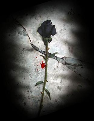61+ Gambar Bunga Mawar Hancur Paling Baru